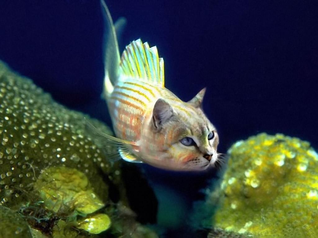 Рыбокот (Fishcat)