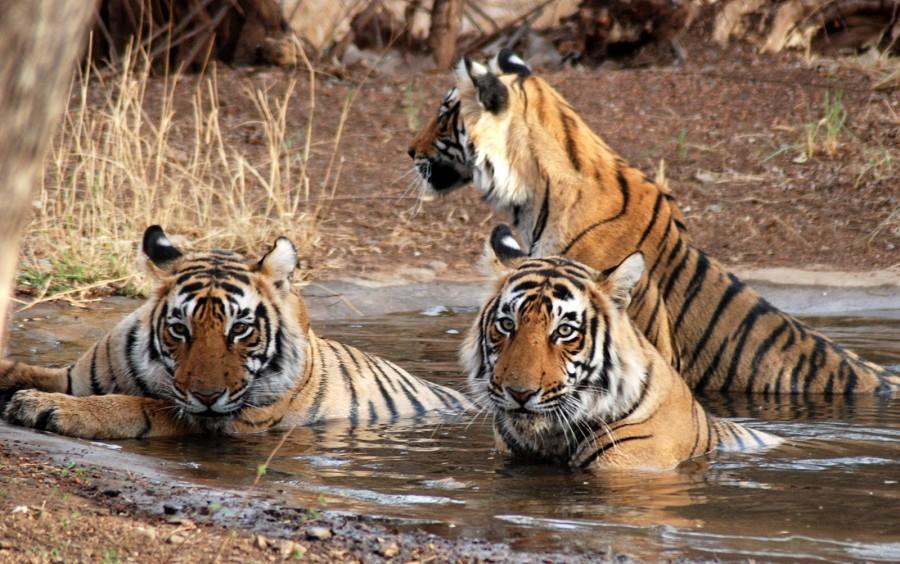 Ranthambhore National Park: