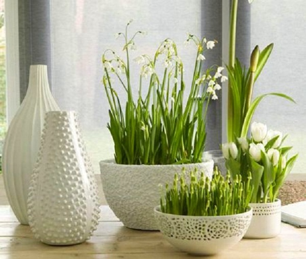 cvety-v-dome