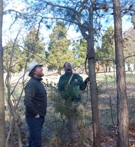 bowmaking tree