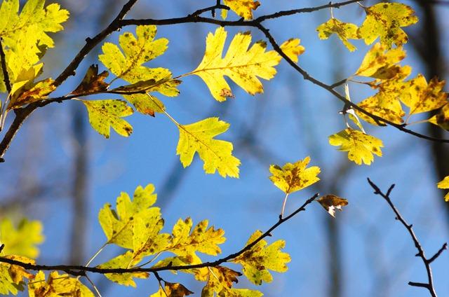 Яркие осенние листики