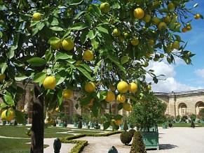 Orangerie-de-Versailles