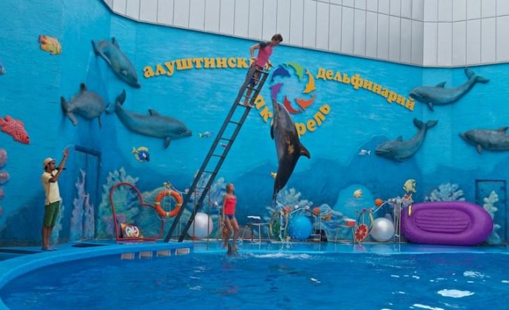 Шоу дельфинов в дельфинарии. Алушта, Крым