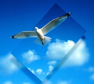 beautiful bird-981435