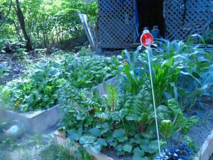 garden 3 weeks in