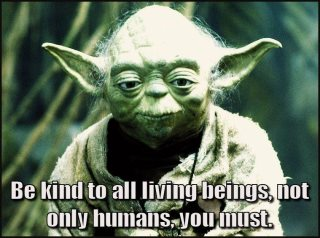 YODA KINDNESS TO ALL THINGS AND BEINGS