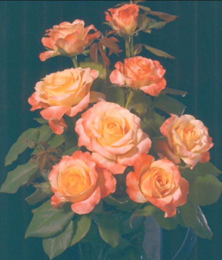 julie newmar rose large