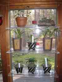Glass Window Shelves for Plants