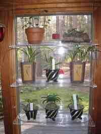 Glass Window Shelves for Plants