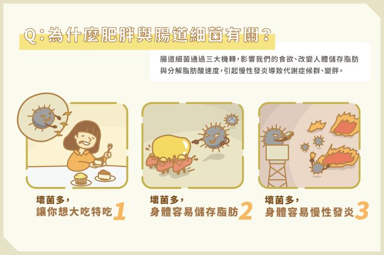 02_腸道菌影響胖瘦 3關鍵養出瘦子菌