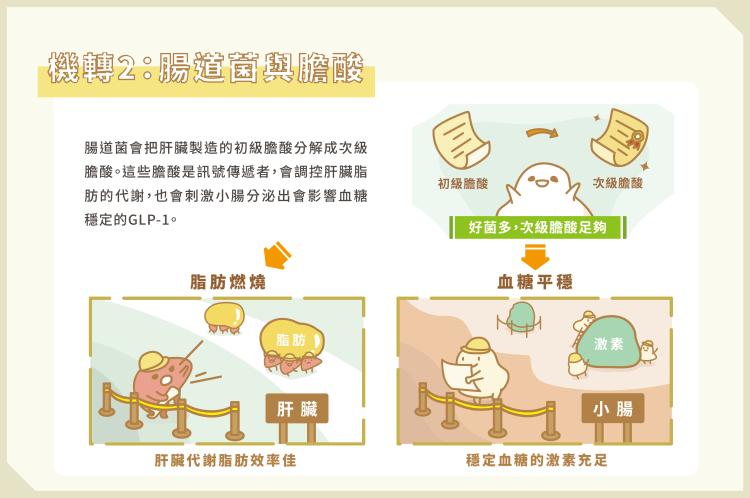 04_腸道菌影響胖瘦 3關鍵養出瘦子菌