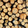 fábrica de casas de madera