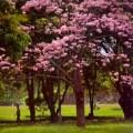 qué nos aportan los árboles