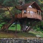 casita en árbol