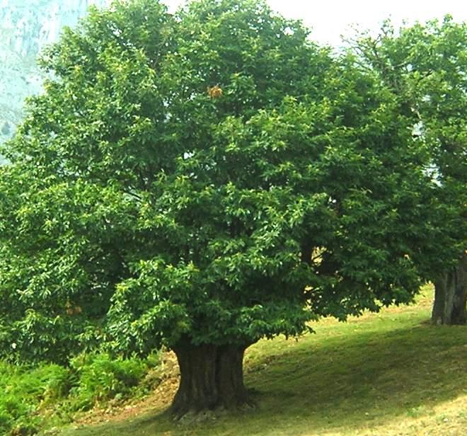 Qué árboles Sembrar En Casa Casas Ecológicas