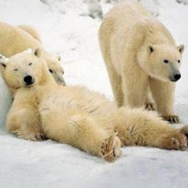 polar express cda pl # 22