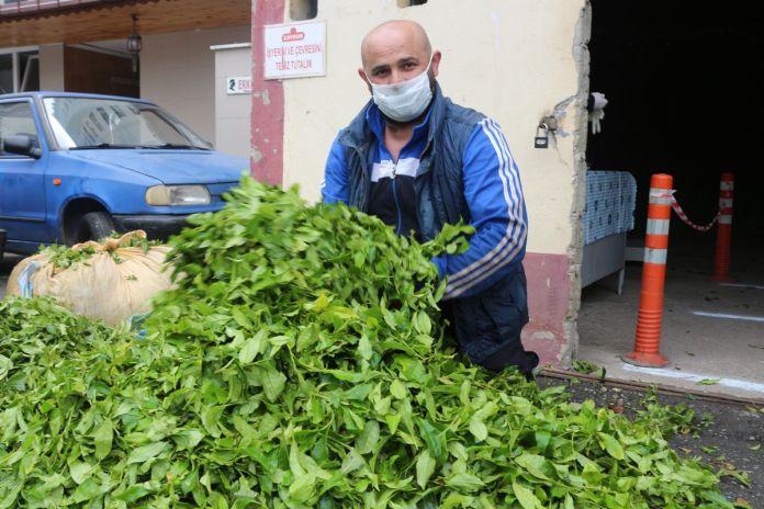 Karadeniz için çay göçü öncesi karantina önerisi #4