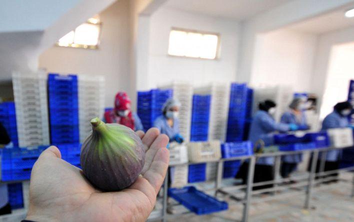 bursa siyahi inciri dunya pazarina ihrac ediliyor 12469