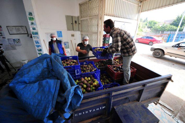 bursa siyahi inciri dunya pazarina ihrac ediliyor 46266