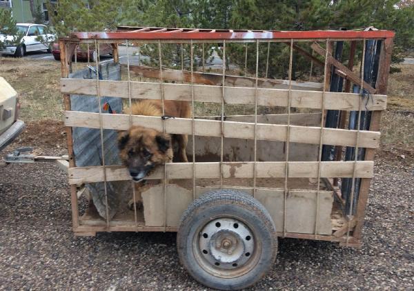 Kayseri'de köpek dövüştürenlere operasyon