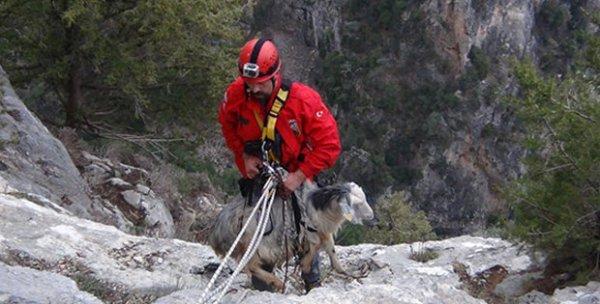 Muğla'da uçurum kenarında mahsur kalan keçi kurtarıldı
