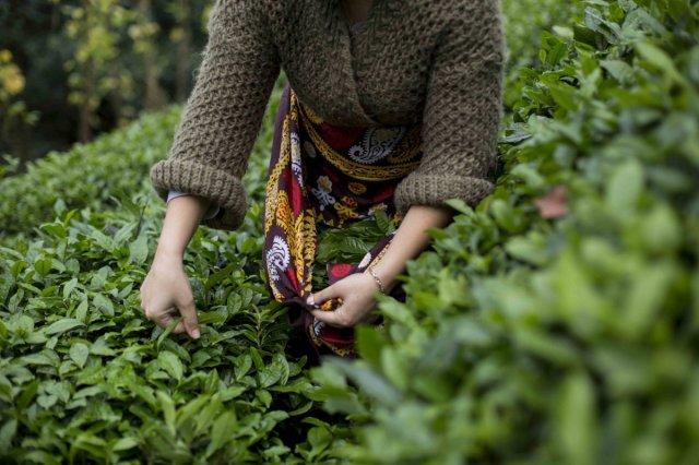 tarim 1610 - Tarım ürünleri üretici fiyat endeksi kasımda arttı