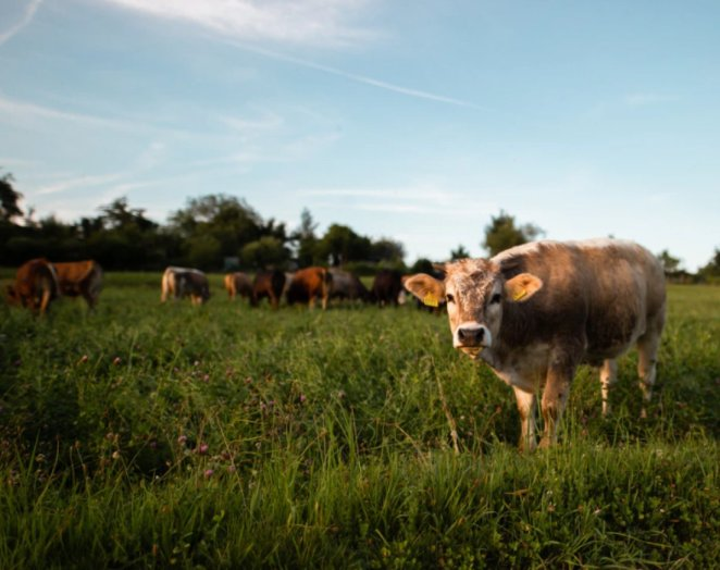 What is mad cow disease and what are its symptoms?  Is mad cow disease deadly, is there a cure?  #2nd