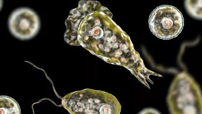 What is amoeba #1