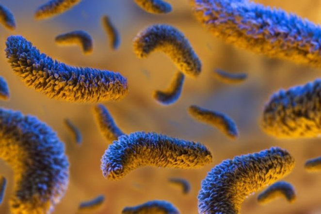 What is coli bacillus #3
