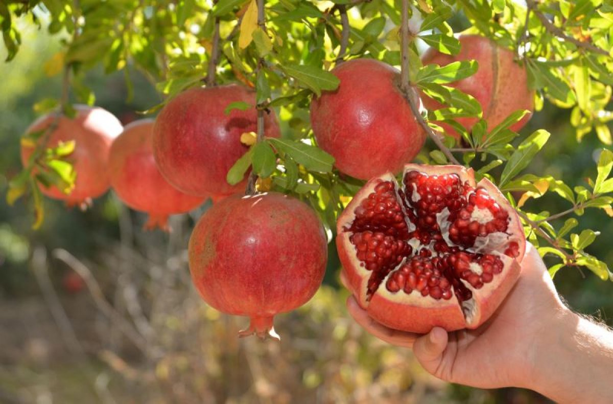 damarlari temizleyen en etkili 11 besin 123
