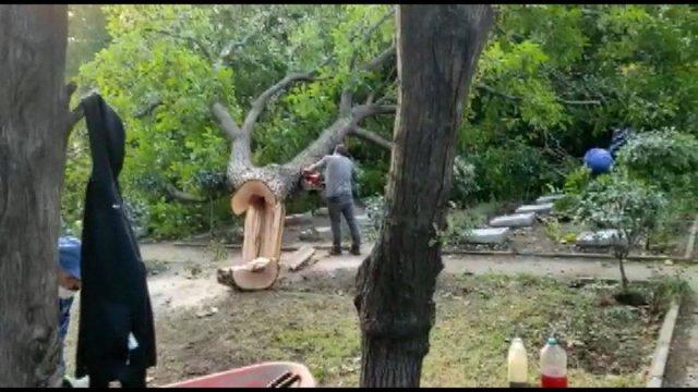 Edirnekapı Şehitliği'ndeki ağaç kesimi tepki topladı #6