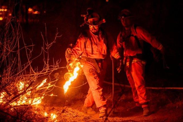 Kaliforniya daki yangınında bir kadının ayı idrarını içmek için yaktığı ateş sorumlu tutuldu #3