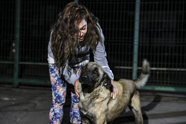 CHP li Çankaya Belediyesi barınaktaki köpekleri ölüme terk etmeye çalıştı #6
