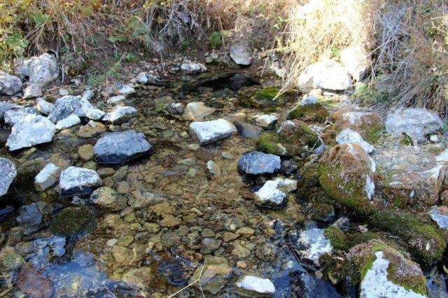 Sivas ta kuraklıktan balıklar susuz kaldı, 20 havuzdan 15'i kurudu #6