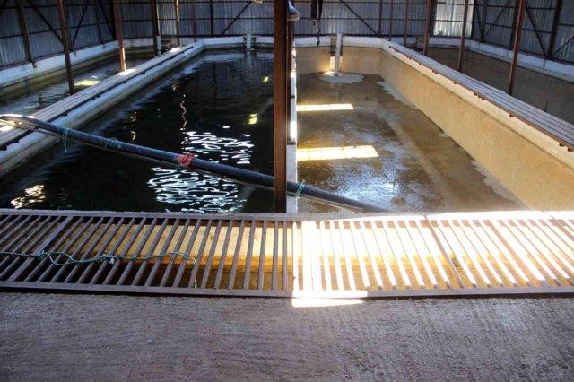 Sivas ta kuraklıktan balıklar susuz kaldı, 20 havuzdan 15'i kurudu #2
