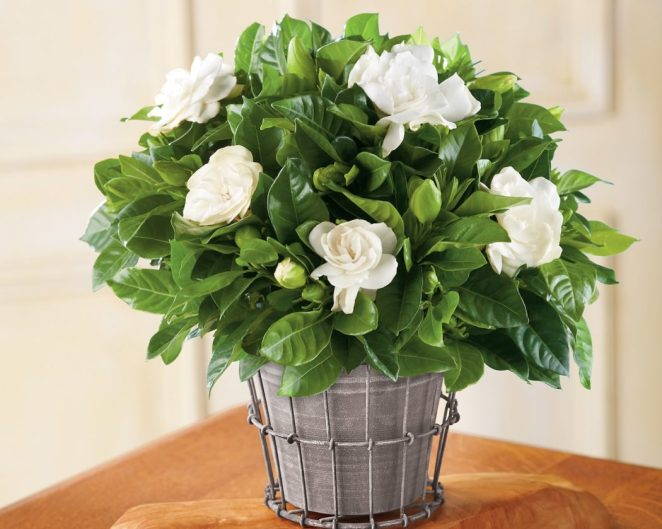 6 houseplants that will make any room in your home beautiful #5