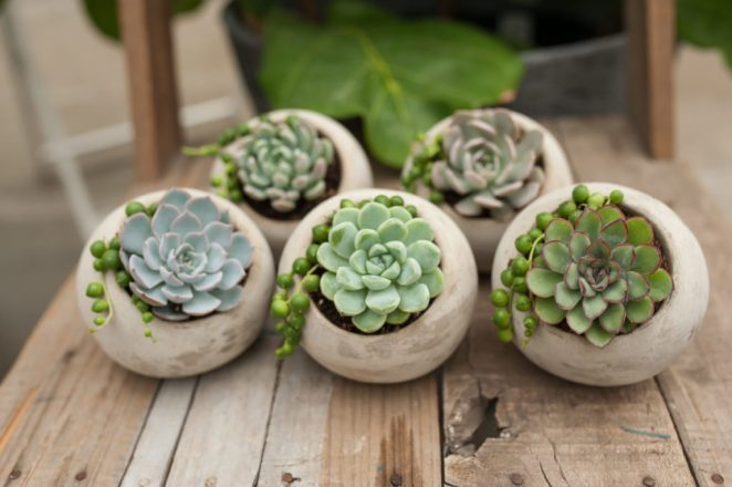 7 plants that can be dangerous to grow at home #2
