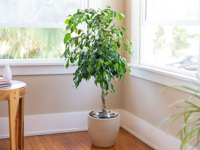 7 plants that can be dangerous to grow at home #6
