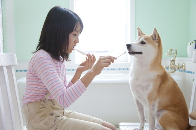 8 ways to keep your pets healthy #2