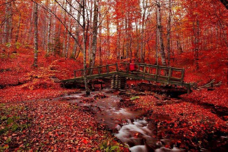 Fall Leaves Pathway Computer Wallpaper Saklı Cennet Yedig 246 Ller De Sonbahar