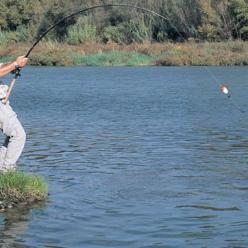 Ловля сома осенью: советы начинающим и заядлым рыбакам