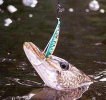 Рыбалка. Какая блесна лучше на щуку?