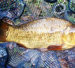 Рыбалка: ловля карася осенью