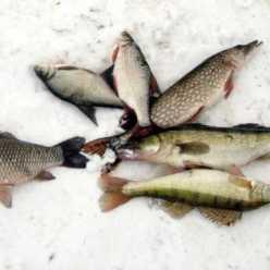Зимная рыбалка - замечательный вид активного отдыха