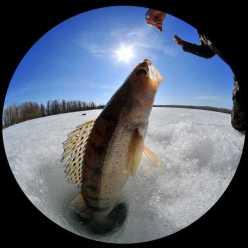Места рыбалки в Акмолинской области и Астане
