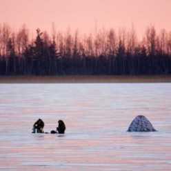 На что ловить весной плотву? Рыбалка на плотву. Плотва на фидер