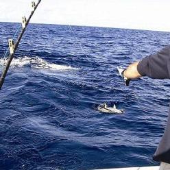 Рыбалка на Черном море с берега и лодки. Снасти для ловли