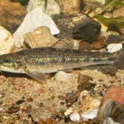 Пескарь - рыба маленькая, но мудрая