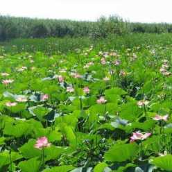 Рыболовные базы в Астраханской области: недорогой и качественный отдых