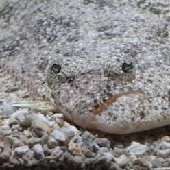 Донные рыбы - их особенности и рыбалка на некоторых из них